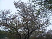 2010_04180032